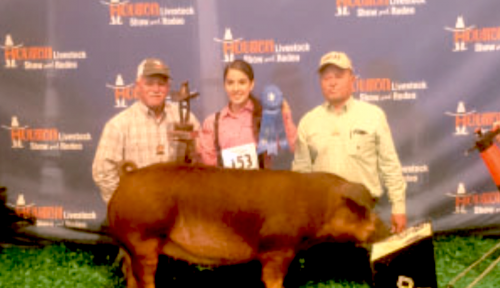 Yvette Ariana Leos, a senior at Channelview High School, got 1st in class with her Breeding Duroc at the 2016 Houston Livestock Show and Rodeo on Friday, March 4, 2016. She purchased the Duroc with the money from the Calf scramble, which she caught in the San Antonio Live stock Show And Rodeo in 2015. She also showed her in San Antonio and got 10th in class on February 11th, 2016. Her teachers are Dominic Mosock and Wesley Hutchinson .